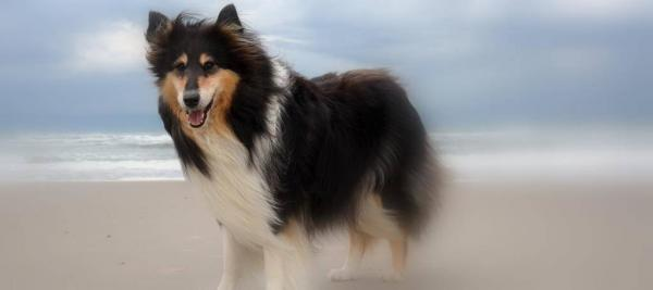Elyn Collie